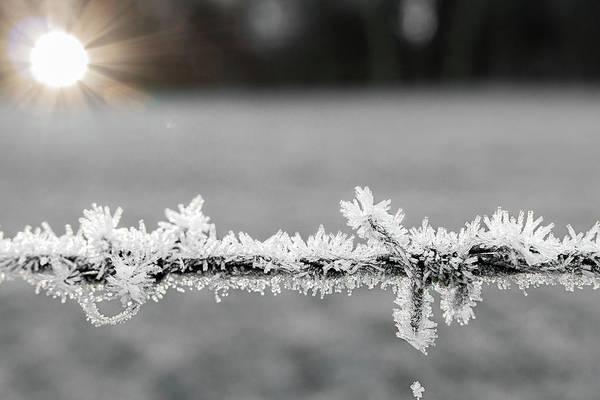 Wall Art - Photograph - Frozen Barbwire by Manuel Posch