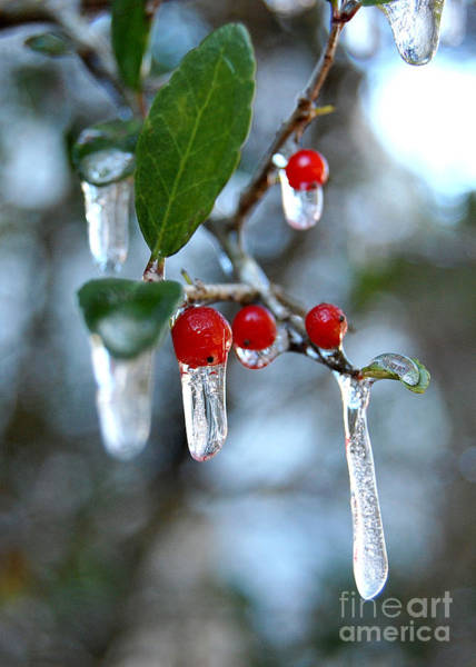 Photograph - Frozen Berries by Donna Bentley