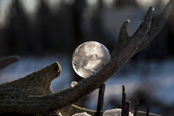 Photograph - Frozen Bubble In Antler by Christina VanGinkel