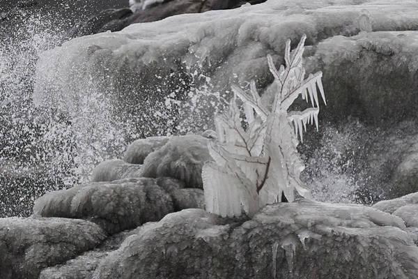 Wall Art - Photograph - Frozen Bush by Paul Freidlund