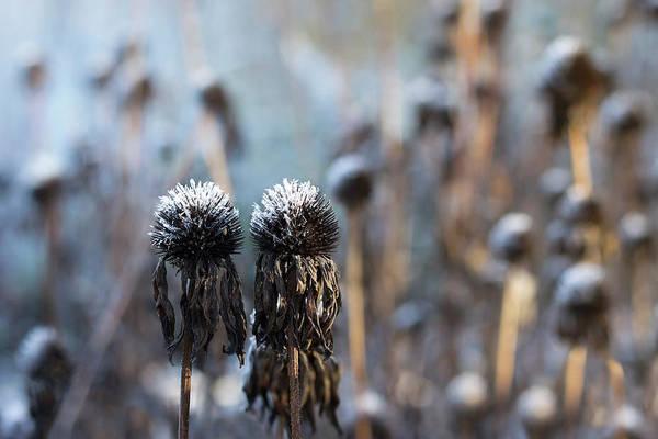 Photograph - Frozen Couple by Helga Novelli