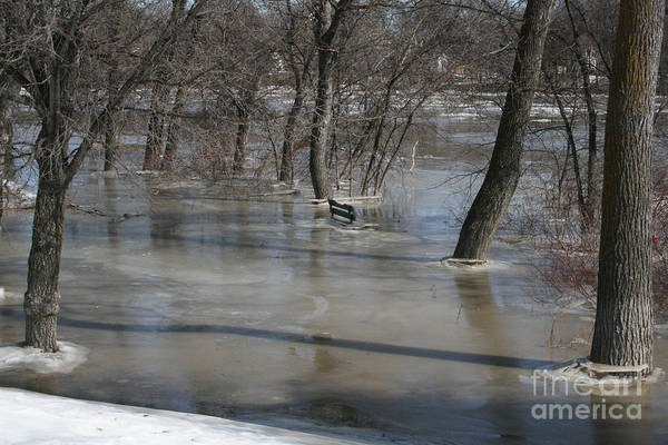 Photograph - Frozen Floodwaters by Mary Mikawoz