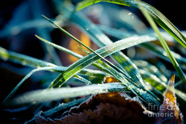Photograph - Frozen Grass Autumn by Raimond Klavins