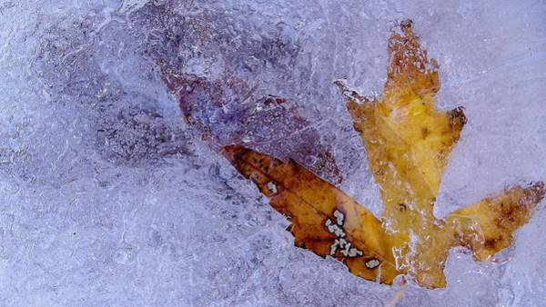 Photograph - Frozen In Time by Shelli Fitzpatrick