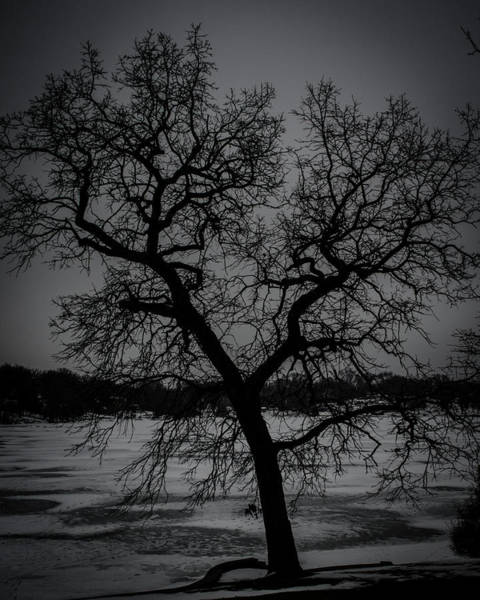 Photograph - Frozen Lake N Trees by Miguel Winterpacht