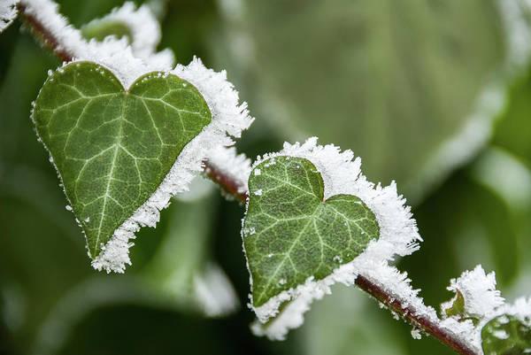 Photograph - Frozen Love by Okan YILMAZ