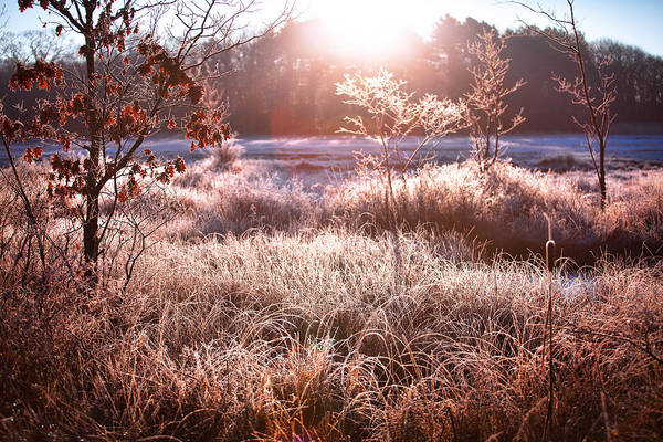 Wall Art - Photograph - Frozen Marsh In Kennebunk Maine by Eric Gendron