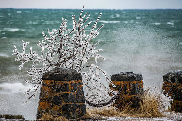 Wall Art - Photograph - Frozen by Paul Freidlund