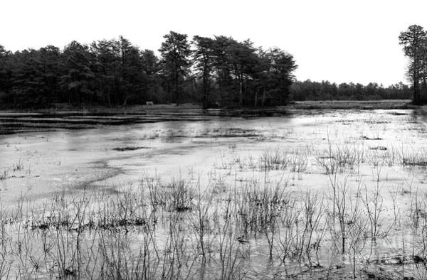 Photograph - Frozen Pineland Pond by John Rizzuto
