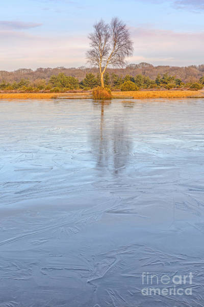 Wall Art - Photograph - Frozen Reflection New Forest by Richard Thomas
