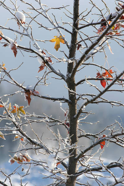 Orange County Digital Art - Frozen Remnants by Holly Ethan