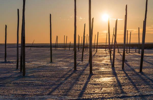 Blvd Photograph - Frozen Sticks by Kristopher Schoenleber