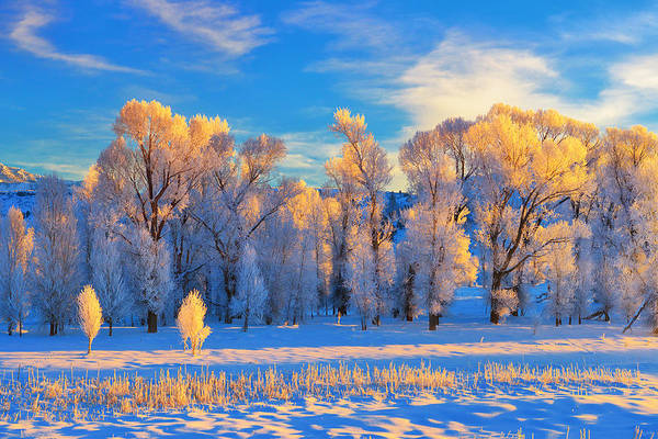 Photograph - Frozen Sunrise by Greg Norrell