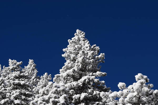 Photograph - Frozen Tranquility Ute Pass Cos Co by Margarethe Binkley