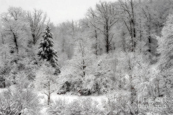 Photograph - Frozen Woods by Dan Friend