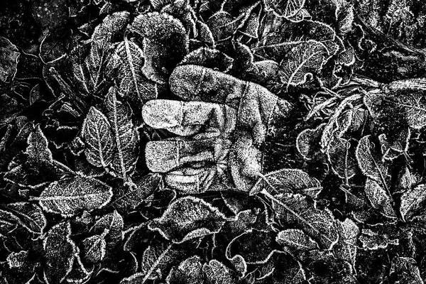 Hakon Photograph - Frozen Working Glove by Hakon Soreide