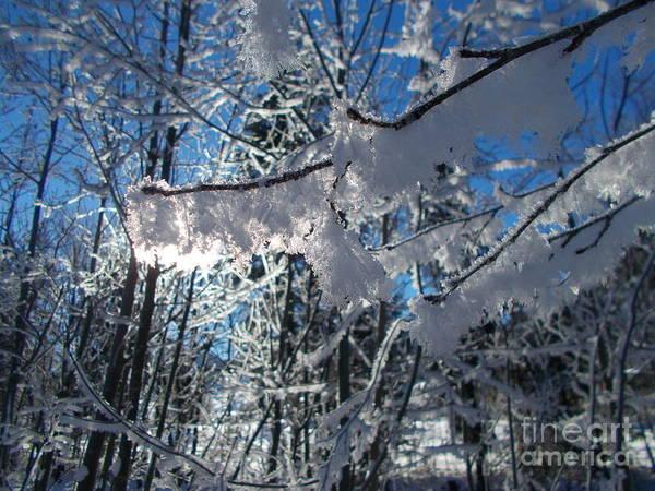 Wall Art - Photograph - Frozen World 2 by Angelika Heidemann