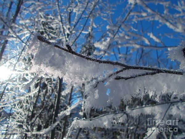 Wall Art - Photograph - Frozen World 3 by Angelika Heidemann