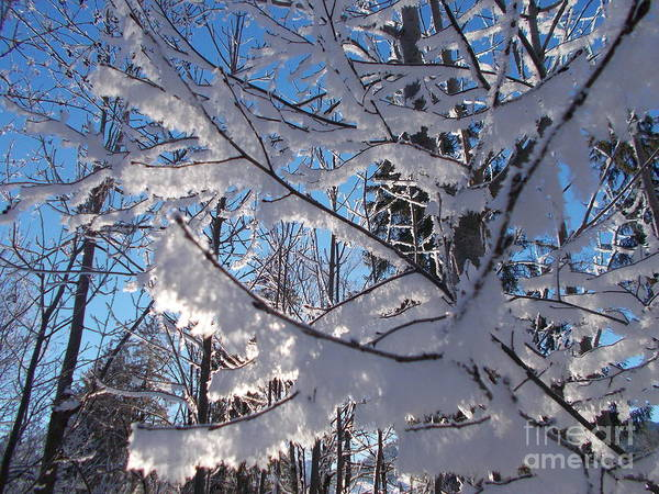 Wall Art - Photograph - Frozen World 5 by Angelika Heidemann
