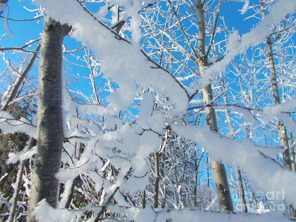 Wall Art - Photograph - Frozen World 6 by Angelika Heidemann