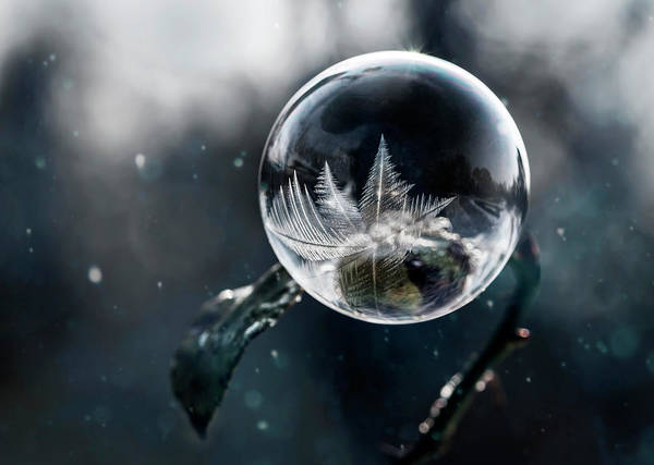 Nature Wall Art - Photograph - Frozen World by Jaroslaw Blaminsky