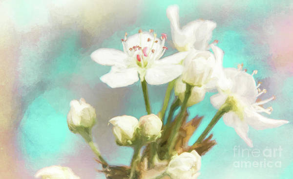 Photograph - Fruit Blossom Painting by Andrea Anderegg
