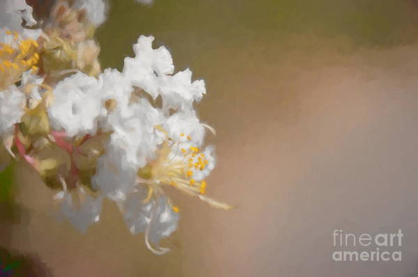 Photograph - Fruit Flower - Bring On Spring Series by Andrea Anderegg