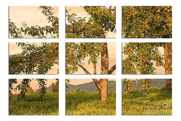 Fruit In The Orchard Through The Window Pane Art Print