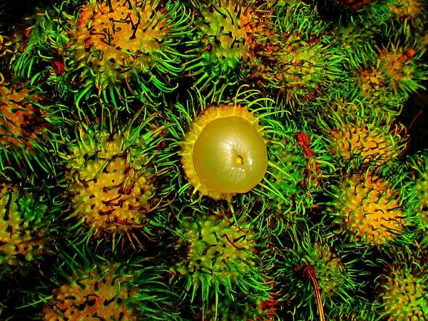 Photograph - Fruit Of Se Asia by Duncan Davies