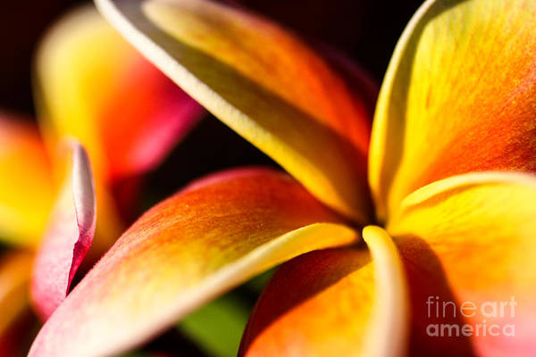 Dione Photograph - Fruit Punch by Dione Scotland Rivero