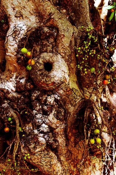 Photograph - Fruitful Tree by Susan Vineyard