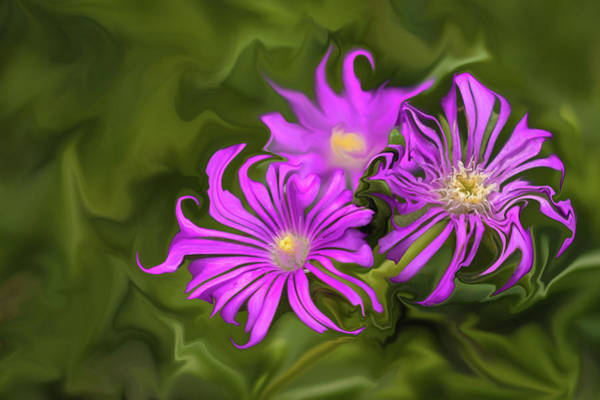 Digital Art - Fuchsia Flower - Digital Painting by Cristina Stefan