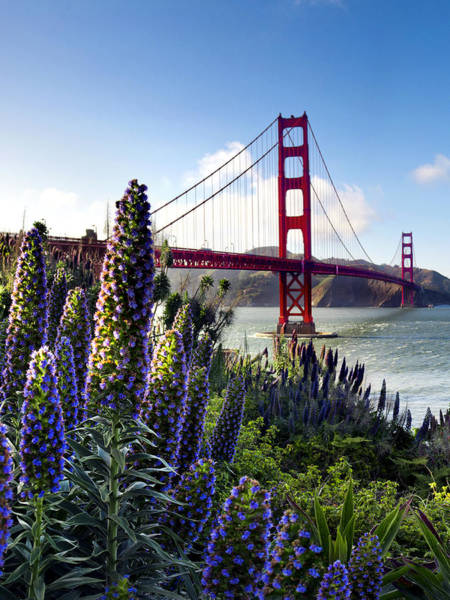 Red Covered Bridge Photograph - Full Bloom Golden Gate by Sean Davey