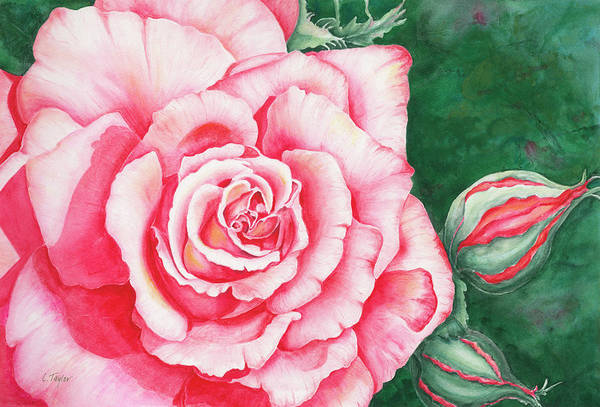Painting - Full Bloom by Lori Taylor
