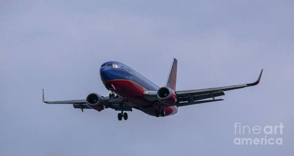 Photograph - Full Flaps by Dale Powell