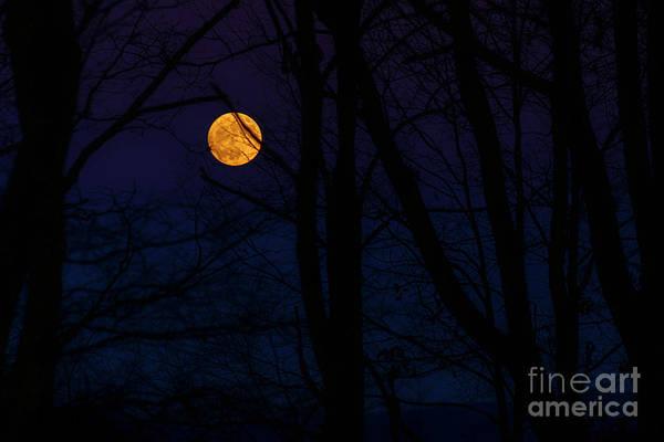 Photograph - Full Moon And Belt Of Venus by Thomas R Fletcher