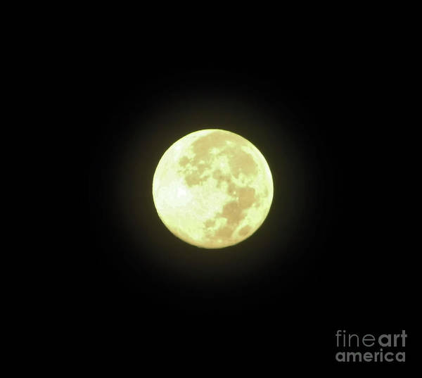 Hackett Photograph - Full Moon August 2014 by D Hackett