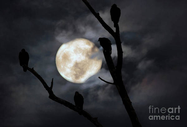 Wall Art - Photograph - Full Moon Committee by Darren Fisher