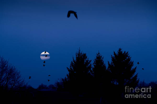 Wall Art - Photograph - Full Moon Crows Silhouette by Arletta Cwalina