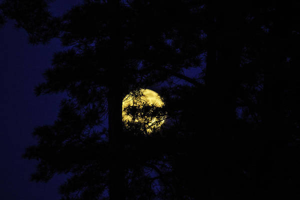 Photograph - Full Moon Fever by Pete Federico