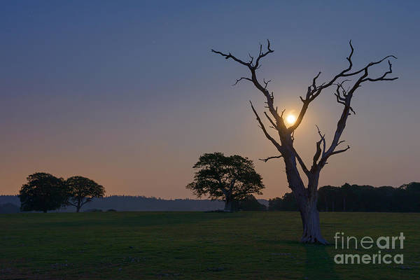 Wall Art - Photograph - Full Moon Framed New Forest by Richard Thomas
