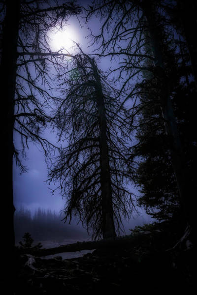 Wall Art - Photograph - Full Moon In The Woods by Cat Connor