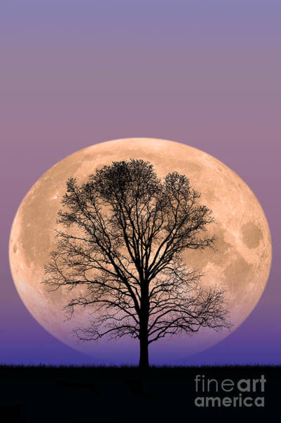 Photograph - Full Moon by Larry Landolfi