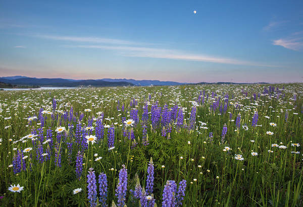 Wall Art - Photograph - Full Moon Meadow by Bridget Calip