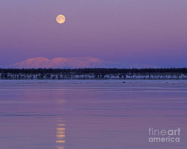 Full Moon Over Mount Susitna Art Print