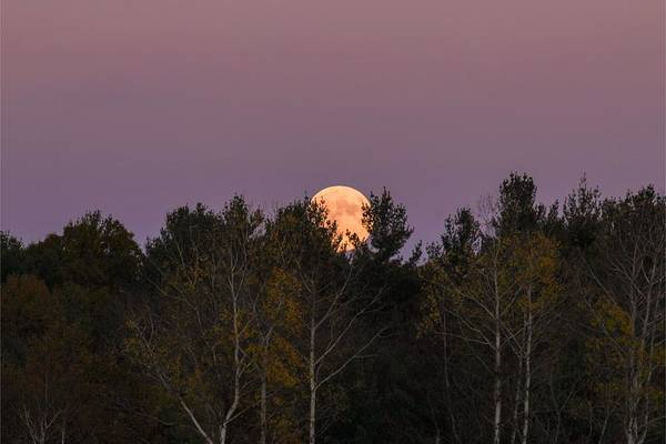 Photograph - Full Moon Over Orchard by Sven Kielhorn