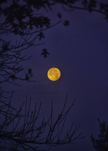 Photograph - Full Moon Sets Behind The Trees by Raymond Salani III