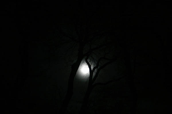 Photograph - Full Moon Through Trees by Marilyn Hunt