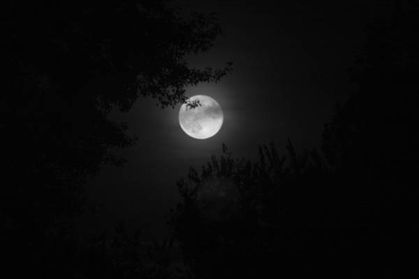 Photograph - Full Moon With Branches by Stephen Holst