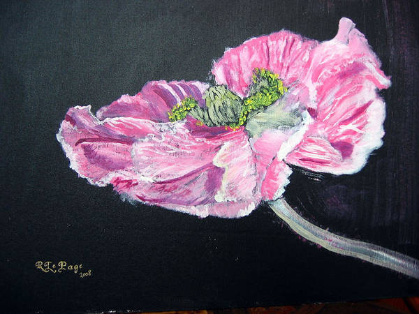 Painting - Fully Open Poppy by Richard Le Page